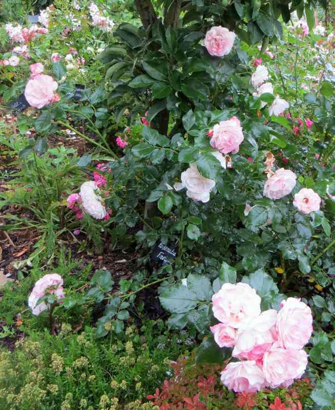 rosenstad freising Rosens10