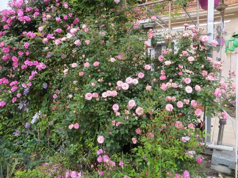 rosier tiffany - Page 3 Tiffan10