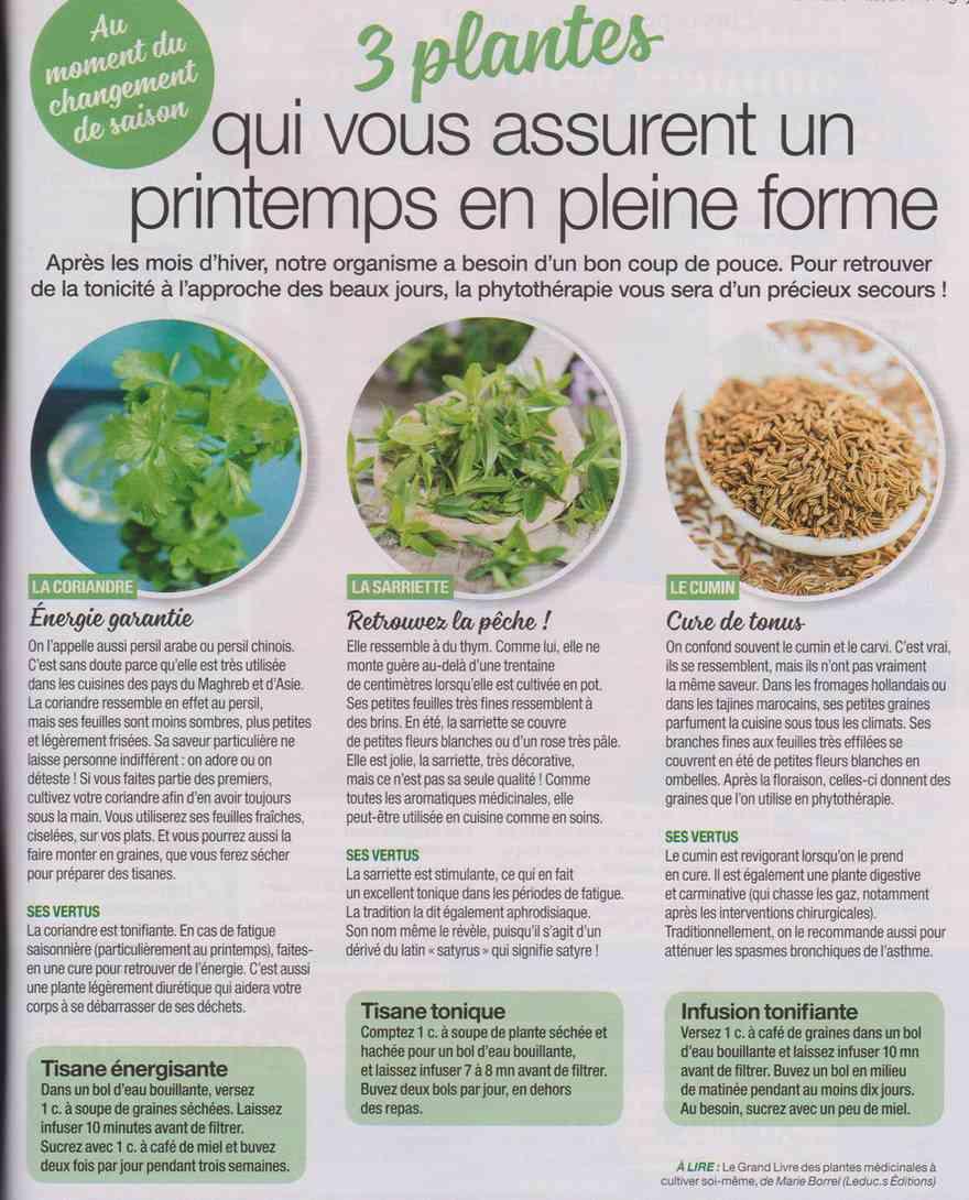 les plantes qui soignent - Page 4 W19