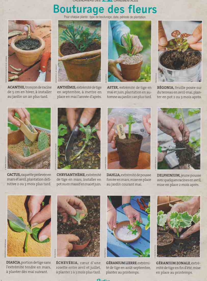 boutures de plantes à fleurs X111