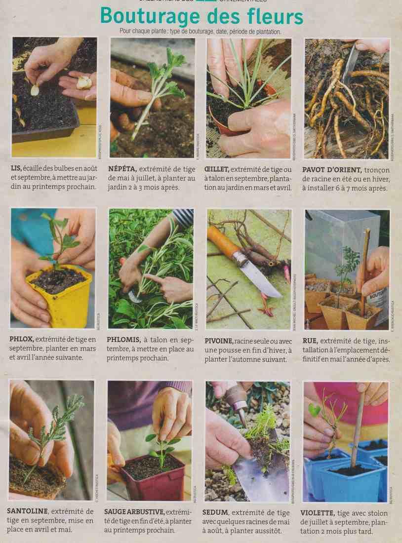 boutures de plantes à fleurs X210
