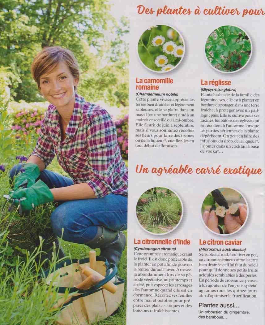 les plantes qui soignent - Page 4 Z116