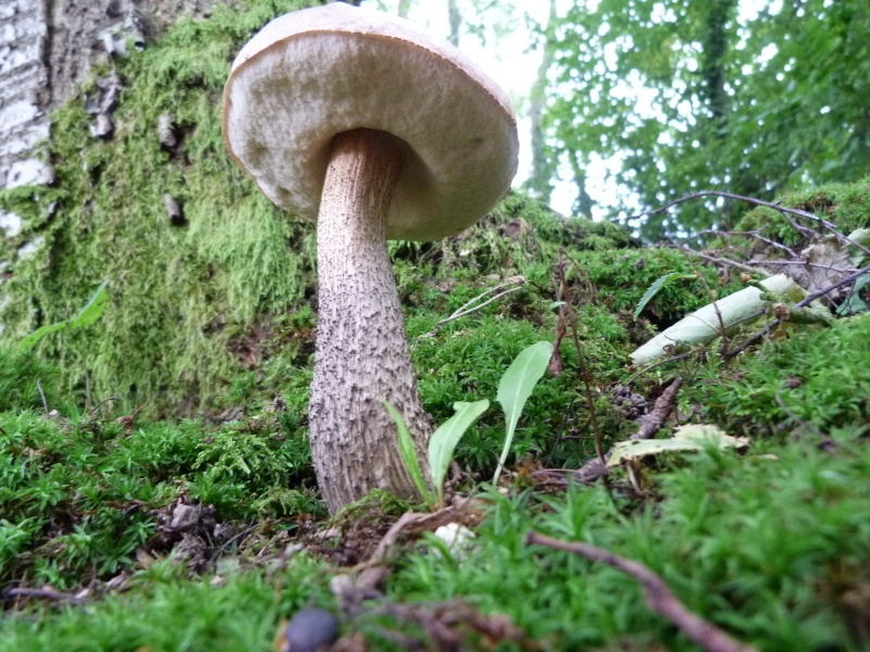 Le monde des champignons... P1030315