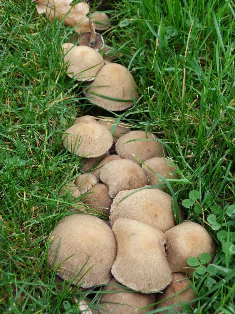 Le monde des champignons... P1030717