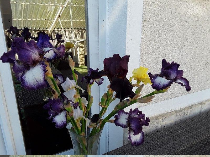 Fleur de Toussaint Remont10