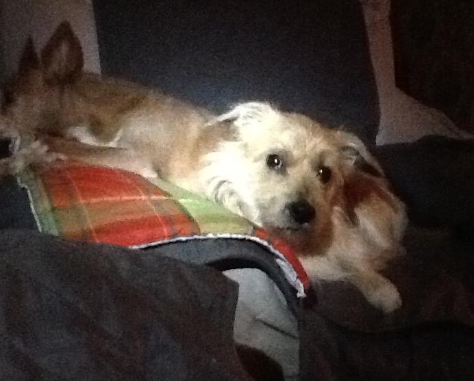 Alf,le lutin blond vénitien ... Image104