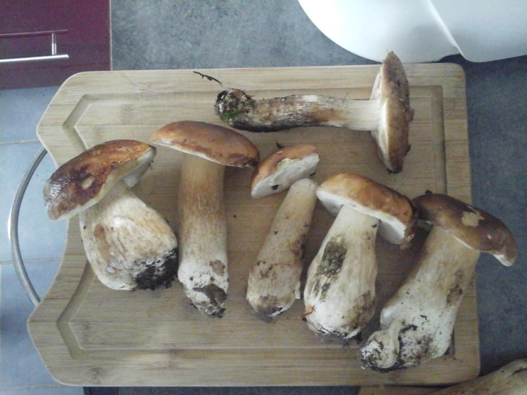 [Cueillette/culture] Les champignons - Page 2 20201010
