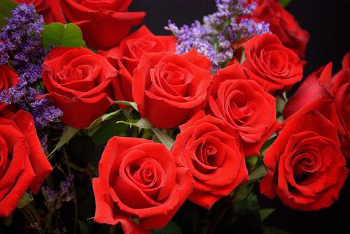 J'aime ou je n'aime pas - Page 2 Rose_r10