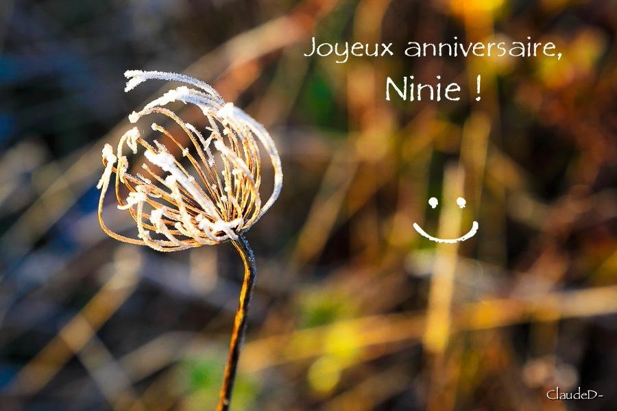 Pour Ninie Aninin10