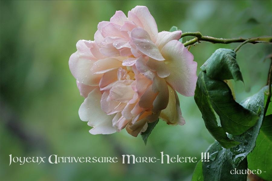 Bon anniversaire à notre Marie-Hélène ! Annivm11