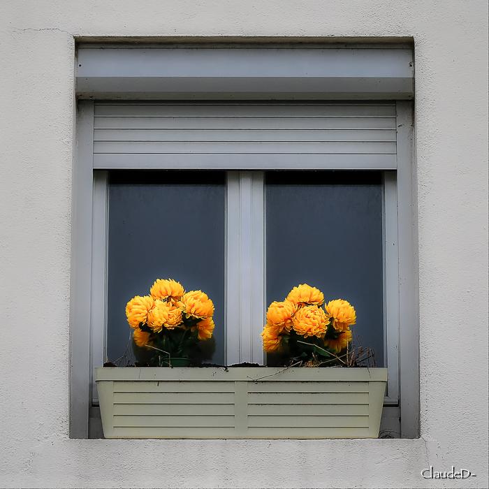 Fenêtre de Toussaint Loc20