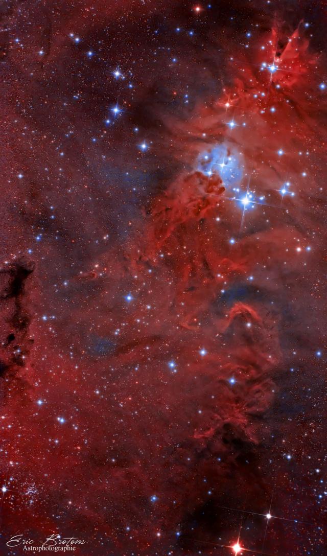 NGC 2264 Nébuleuse du sapin de noel  Ngc_2221
