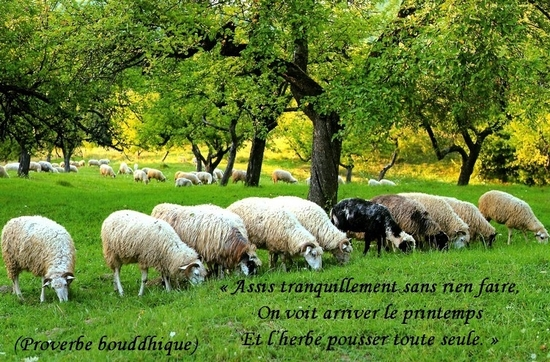 citation du jour/celebres et images de colette - Page 13 Assis10