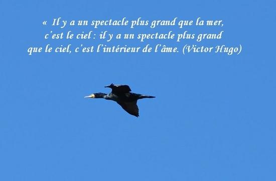 citation du jour/celebres et images de colette - Page 13 L_ame10
