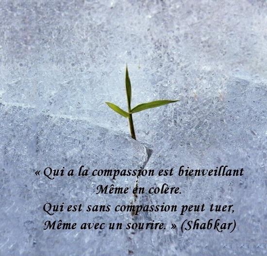 citation du jour/celebres et images de colette - Page 14 La_com10