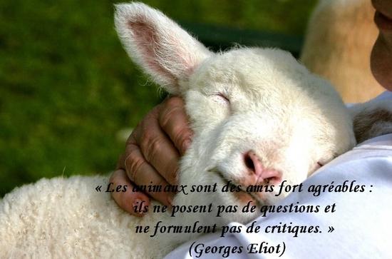 citation du jour/celebres et images de colette - Page 13 Les_an10