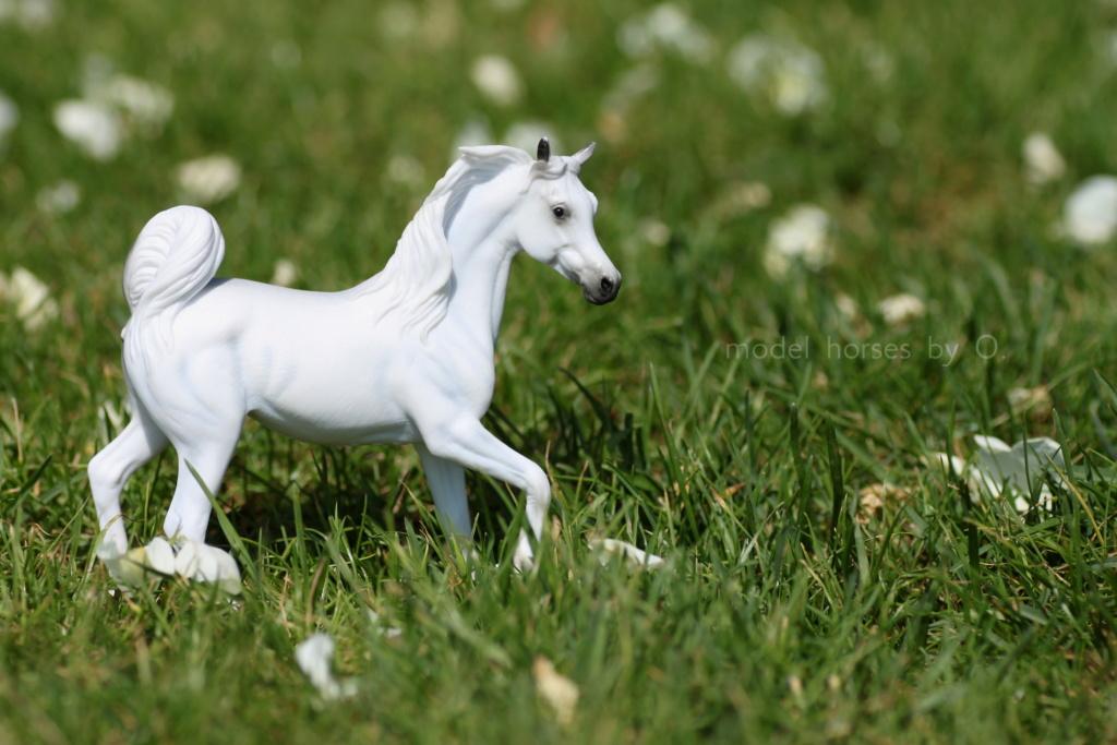 my Deborah McDermott's horses - Page 2 Arab_m10