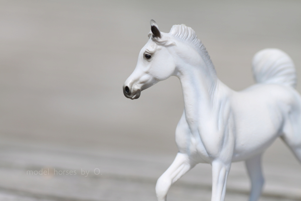 my Deborah McDermott's horses - Page 2 Energi10