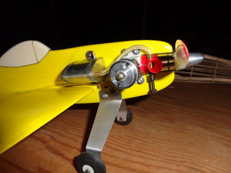 My new bird Dsc00413