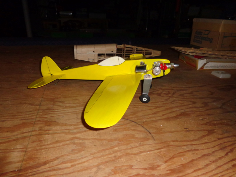 My new bird Dsc00415