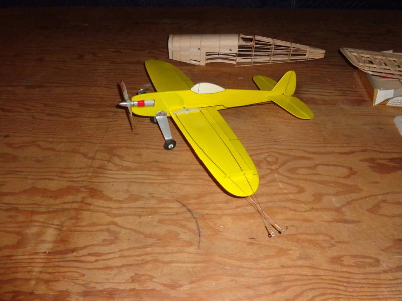 My new bird Dsc00418