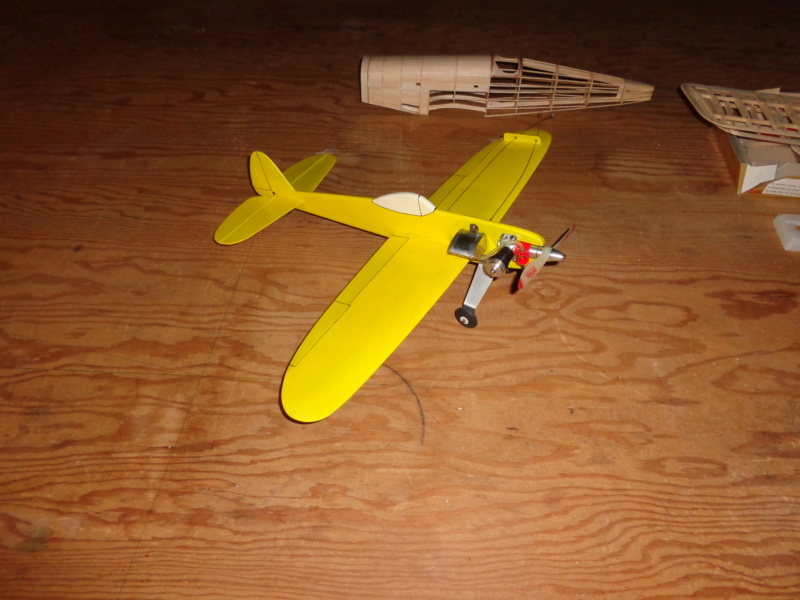 My new bird Dsc00419