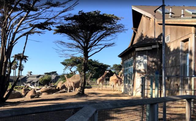 Communauté agraire de Gaïa Zoo10