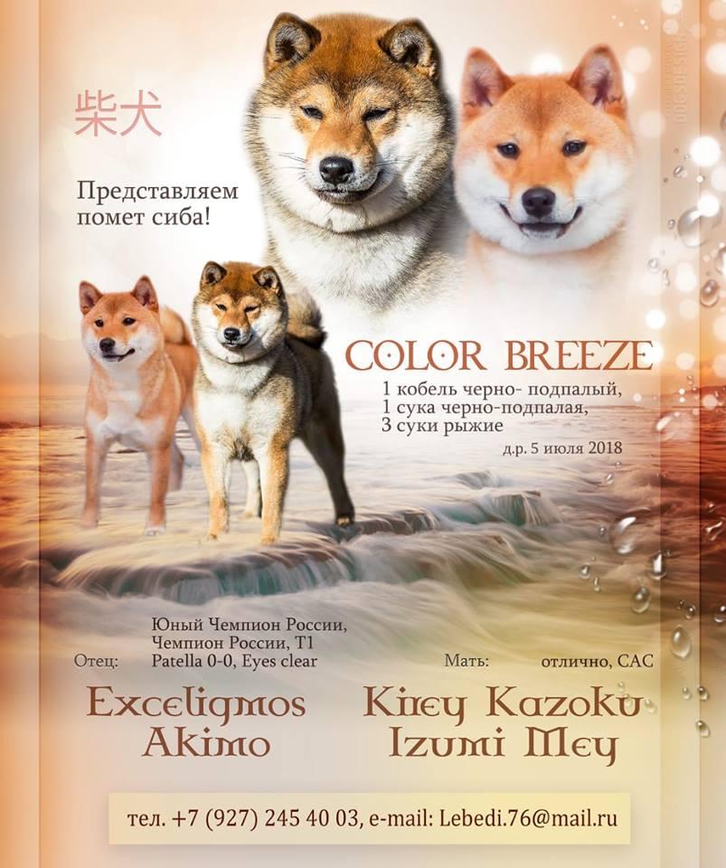 Exceligmos Akimo (Blin)  36868810