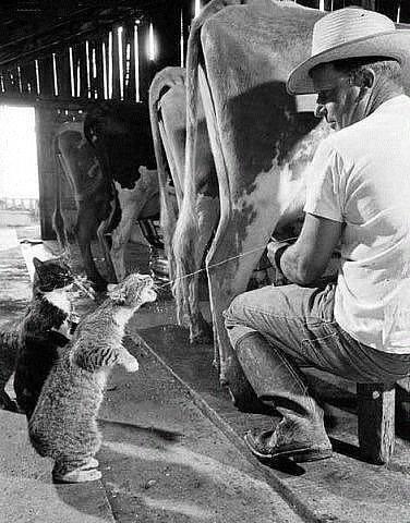 Всемирный День Кошек - Страница 10 10416610