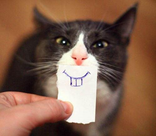 Всемирный День Кошек - Страница 15 14551210