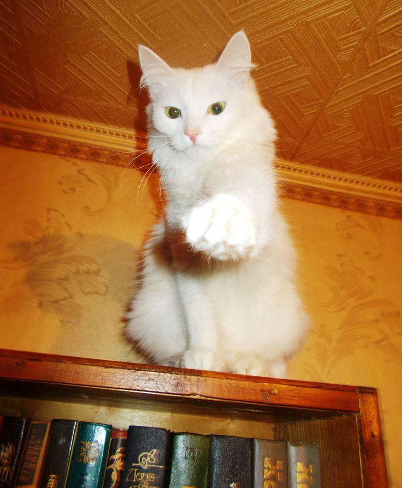 Всемирный День Кошек - Страница 11 35206710