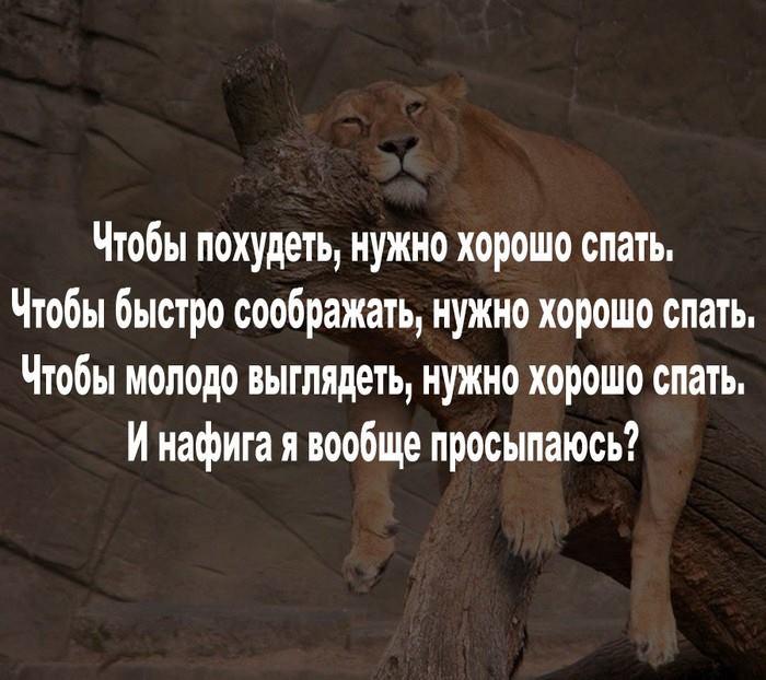 Всемирный День Кошек - Страница 10 36386110