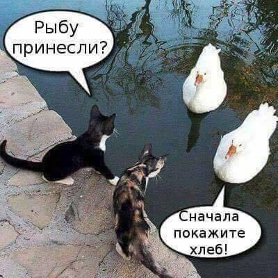 Всемирный День Кошек - Страница 11 36910210