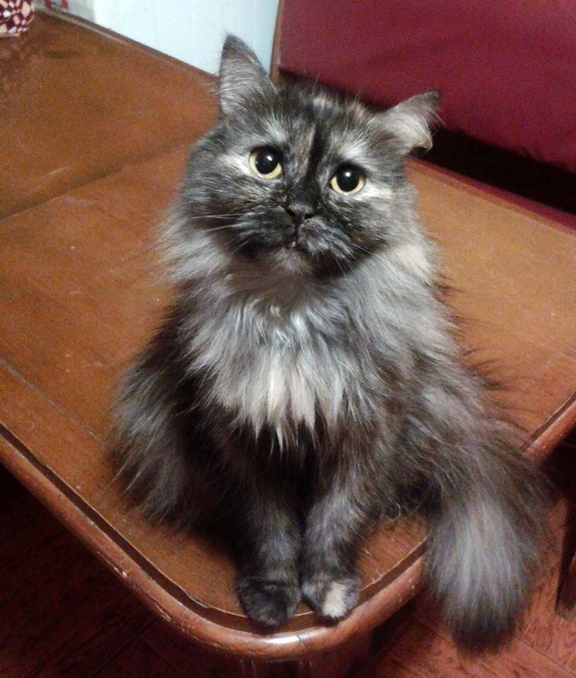 Всемирный День Кошек - Страница 11 36954610