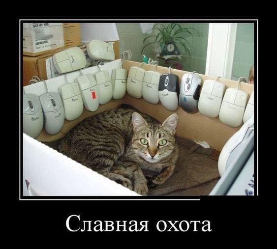 Всемирный День Кошек - Страница 13 38632810