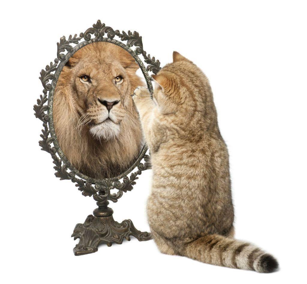 Всемирный День Кошек - Страница 13 39282910