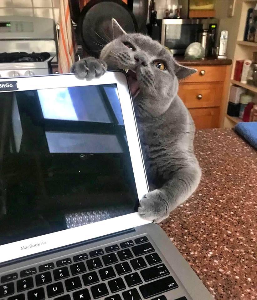Всемирный День Кошек - Страница 15 41738510