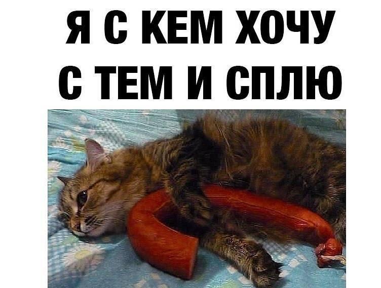 Всемирный День Кошек - Страница 15 41769910