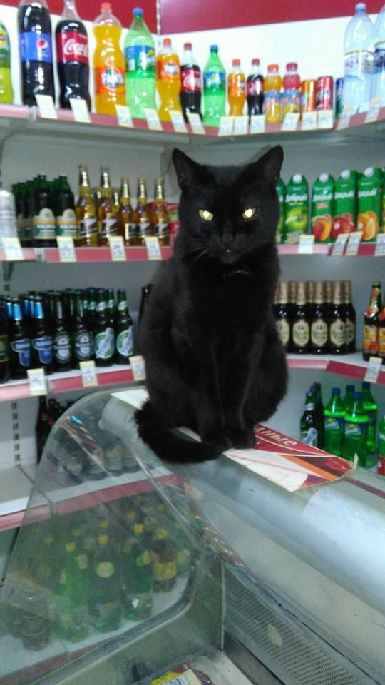 Всемирный День Кошек - Страница 15 42092110