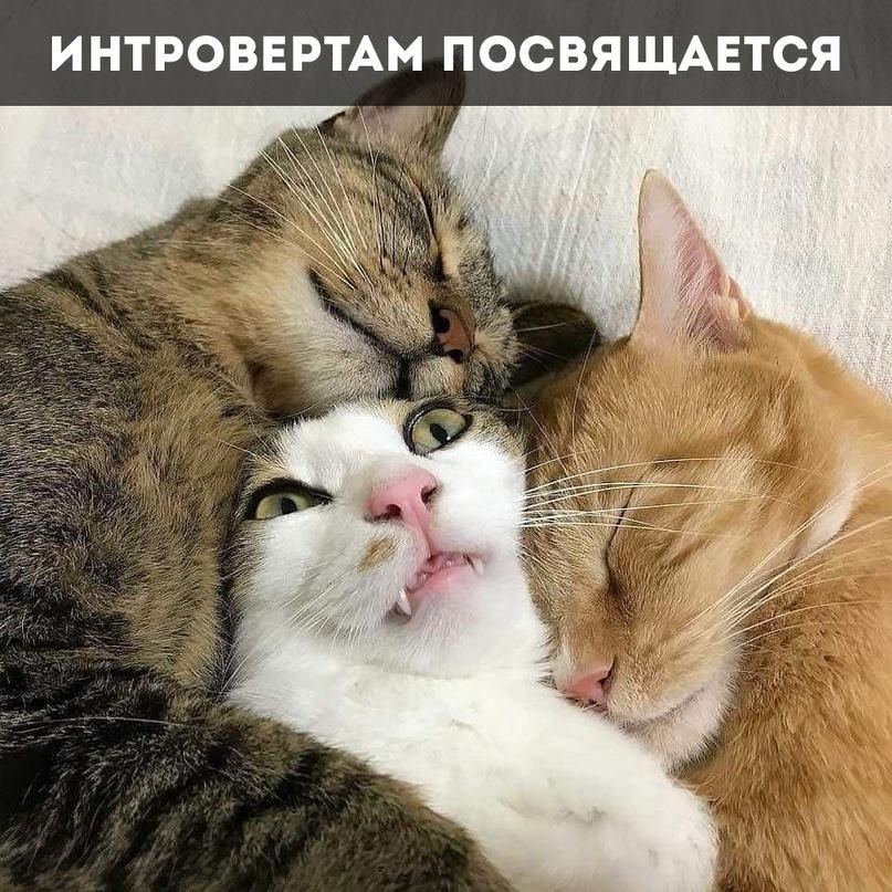Всемирный День Кошек - Страница 15 42614810