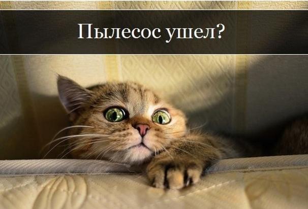 Всемирный День Кошек - Страница 11 472710