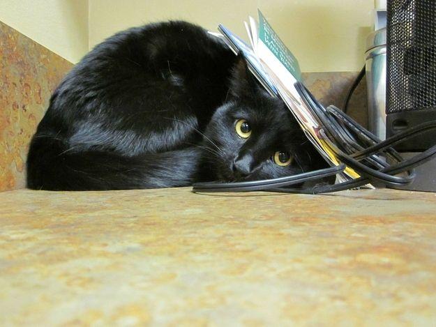 Всемирный День Кошек - Страница 11 61005910