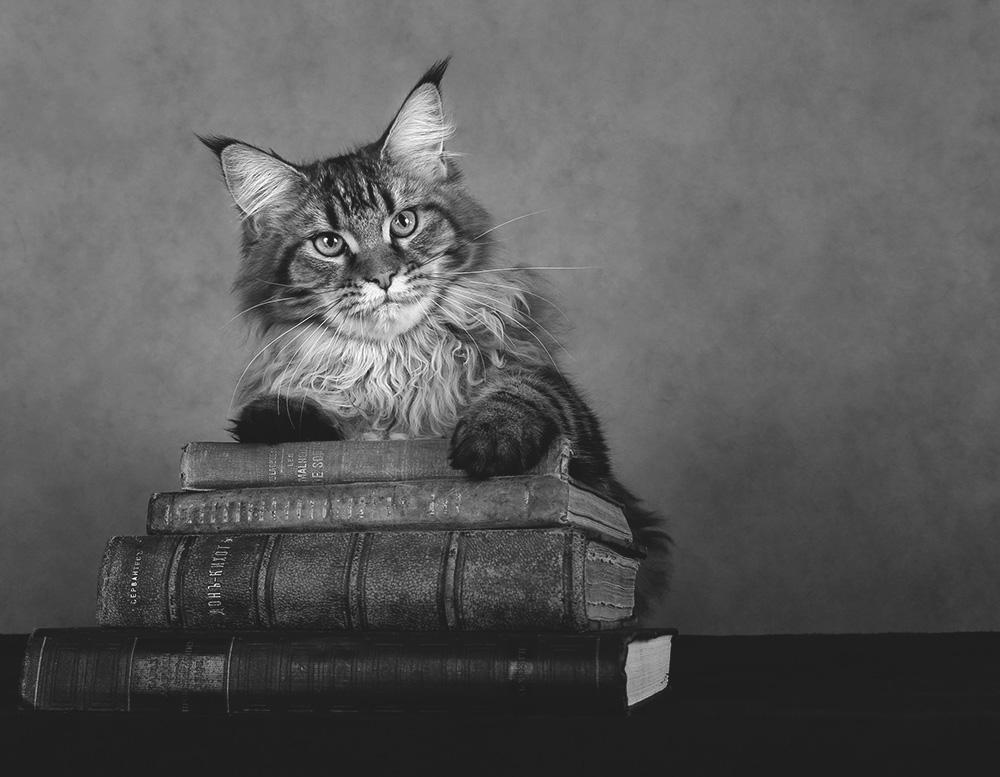 Всемирный День Кошек - Страница 13 70516_10