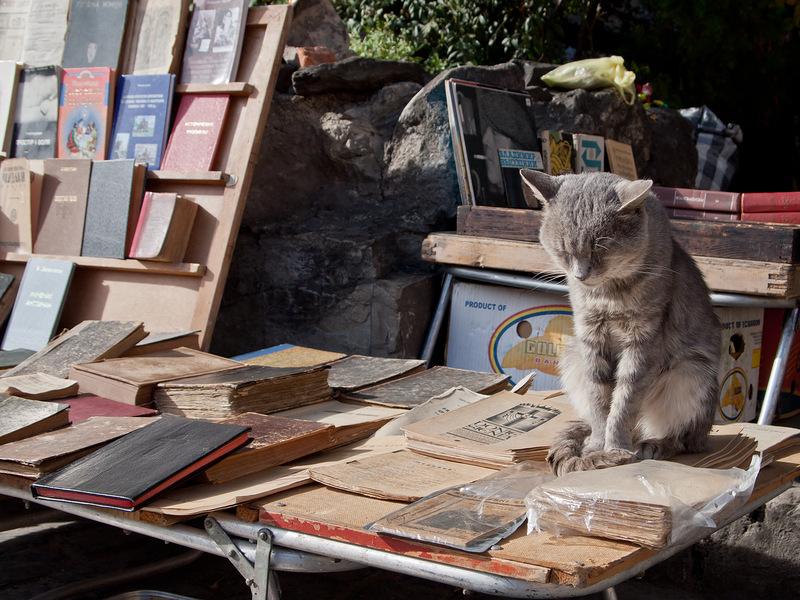 Всемирный День Кошек - Страница 11 800x0_10