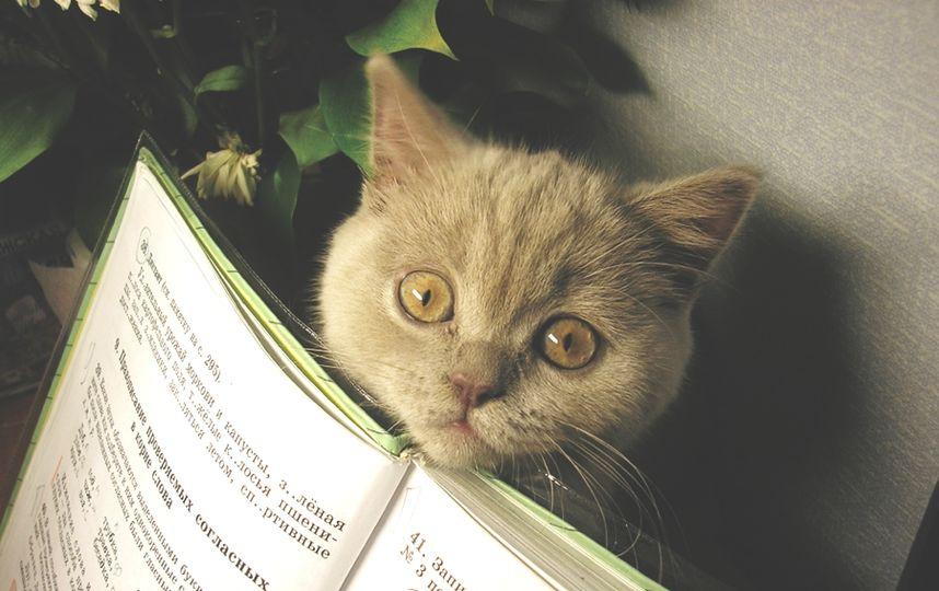 Всемирный День Кошек - Страница 11 858x5410