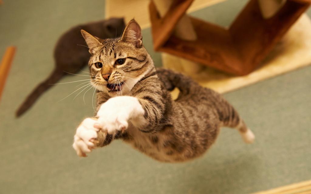 Всемирный День Кошек - Страница 15 9eb57910