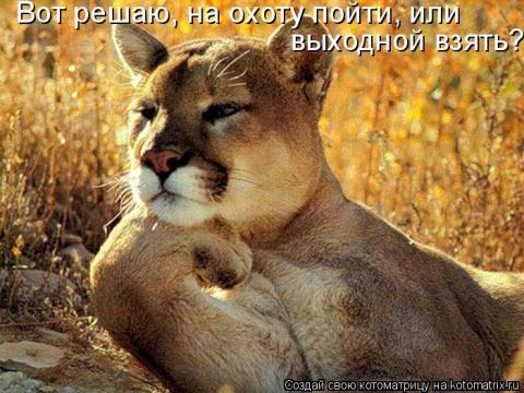 Всемирный День Кошек - Страница 13 Aa10