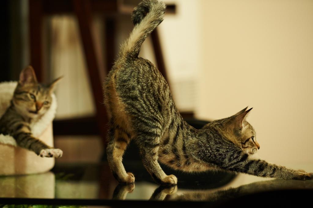 Всемирный День Кошек - Страница 15 Cats-p10