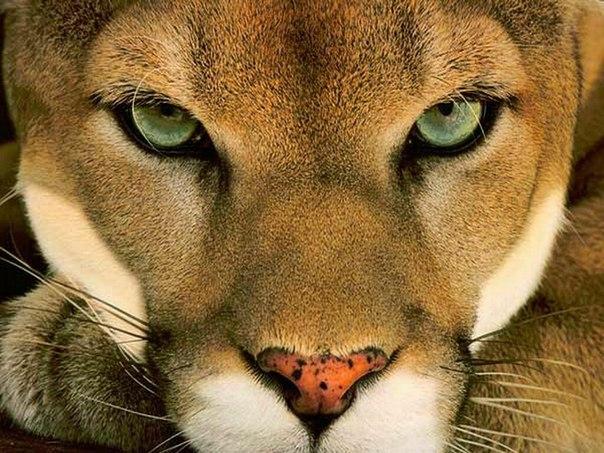 Всемирный День Кошек - Страница 13 Cnnazl10