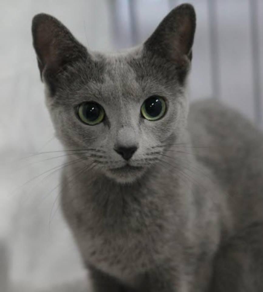 Всемирный День Кошек - Страница 13 Dbincu10